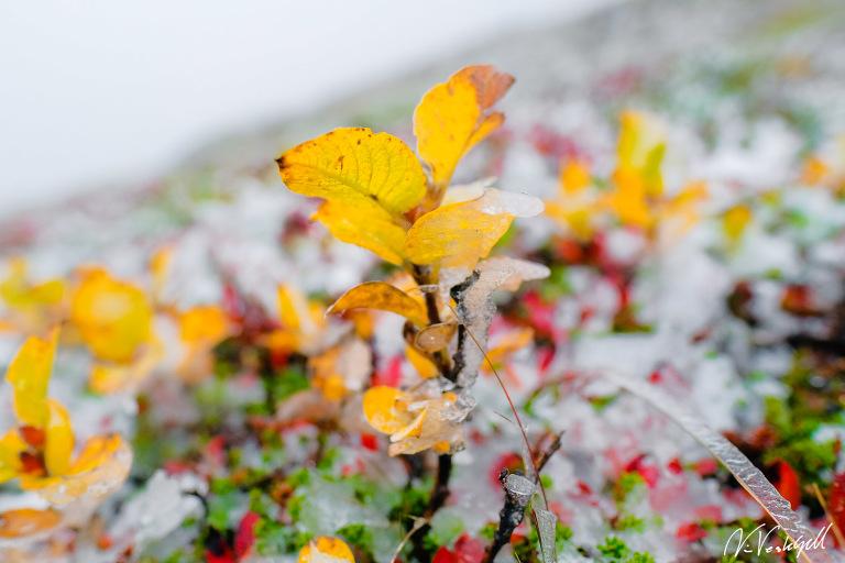 Foto: Niclas Vestefjell från Åre - fotograf